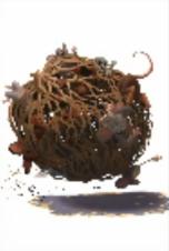 tumbleweed mice